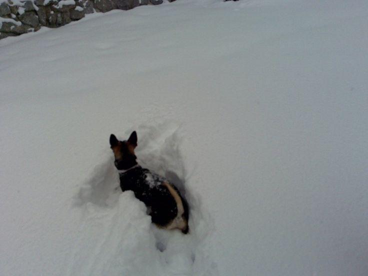 Winterwandern mit Hund-Aktiv im Winter-Aktiv mit Hund-urlaub-mit-hund-info.com- Tirol Österreich