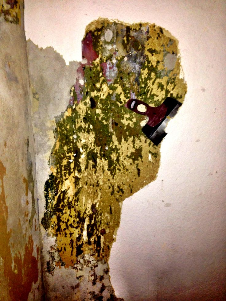 Week 5 -  many layers of #wallpaper #old #apartment