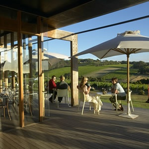 Montalto Vineyards and Olive Grove on the Mornington Peninsula, Victoria - one of our faves!