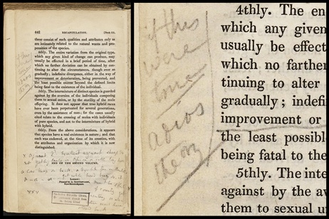 """Darwin's notes stating, """"If this were true adios theory"""" from page 442 from Charles Lyell's Principles of Geology Vol. 2."""
