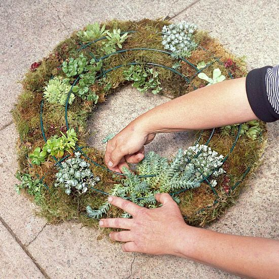 297 best images about succulents on pinterest gardens for Soil for succulents