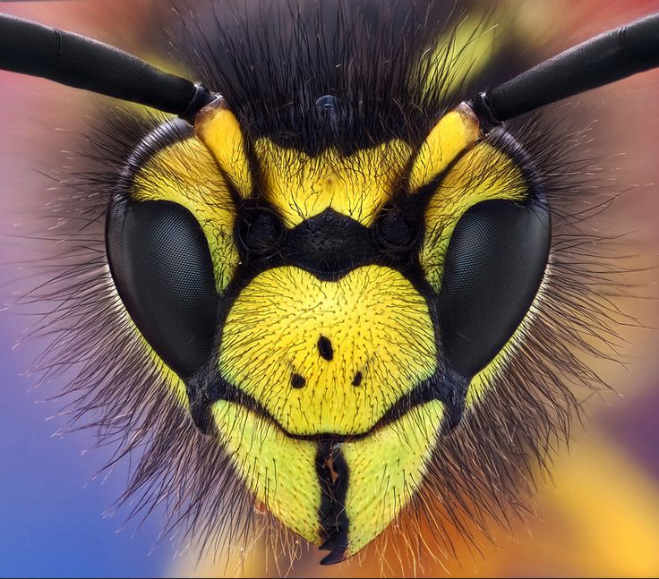 Wasp Macro Photography!  Call A1 Bee Specialists in Bloomfield Hills, MI today at (248) 467-4849 to schedule an appointment if you've got a stinging insect problem around your house or place of business!