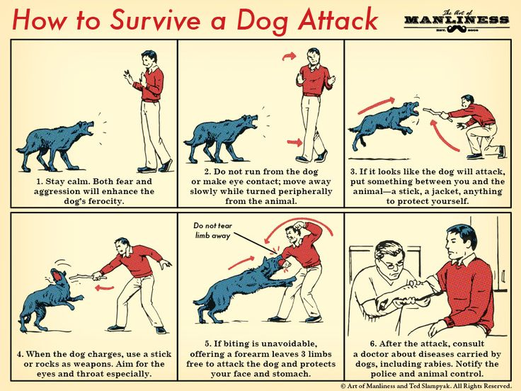 How To Survive a Dog Attack || The Art of Manliness