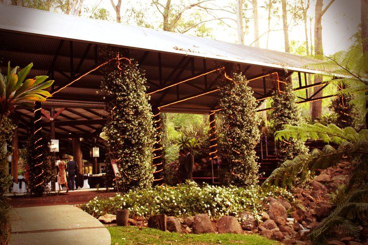 Rainforest Wedding Ceremony and Reception