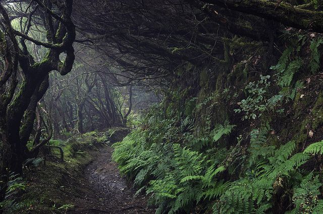 "theemeralddream: "" {a walk in the woods} #3 by xcentris on Flickr. """
