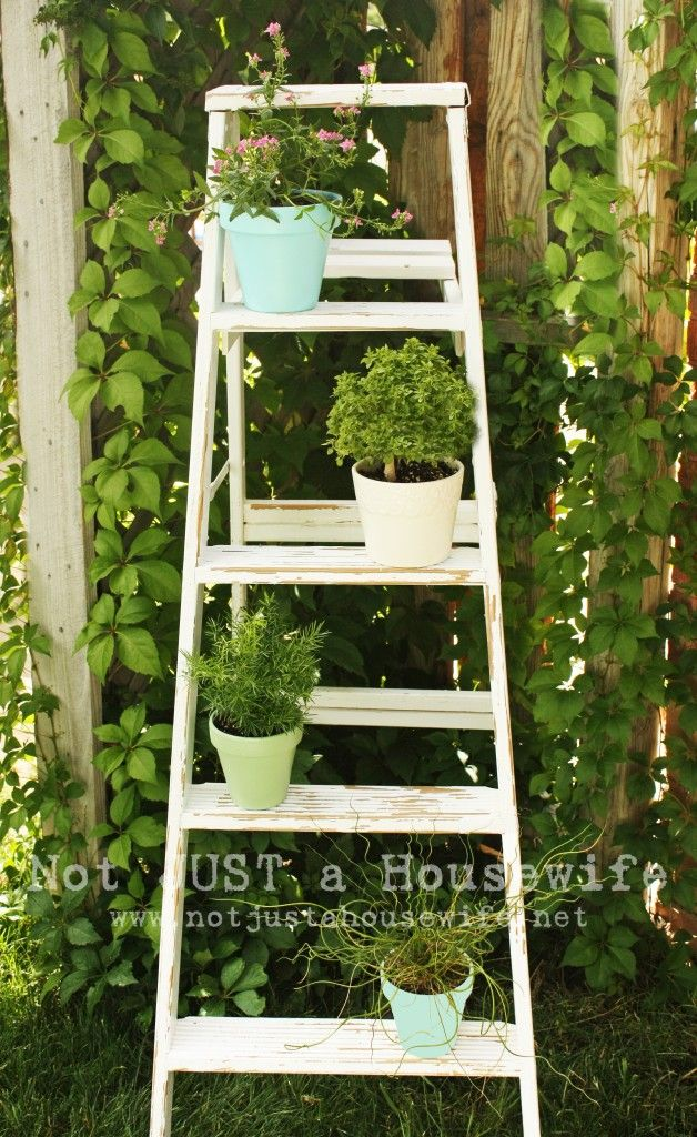 paint old ladder for plant shelf/display: Plants Can, Wooden Ladder, Old Ladder, Plants Stands, Cute Ideas, Herbs Gardens, Vintage Ladder, Ladder Ideas, Ladder Plants