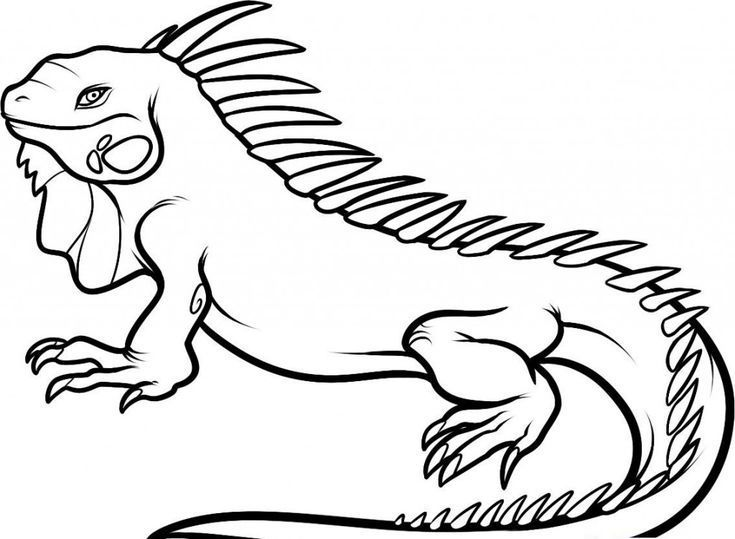Easy Free Printable Iguana Coloring Pages For Kids Easy With