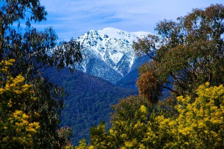 Springtime and snow, Mt Bogong, Vic, Australia