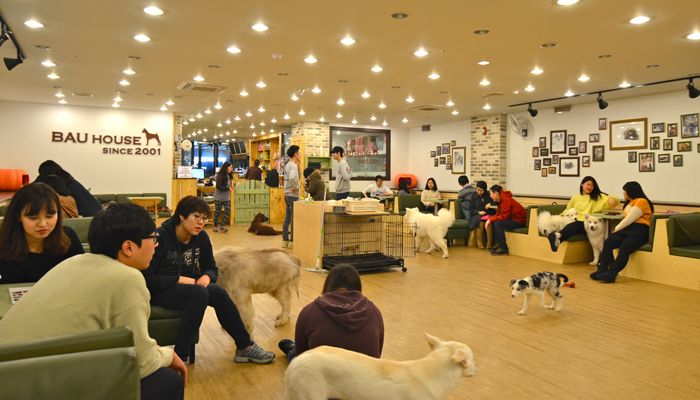 Get your dose of puppy love and canine cuddles with a visit to Bau House Dog Cafe in Seoul, South Korea!
