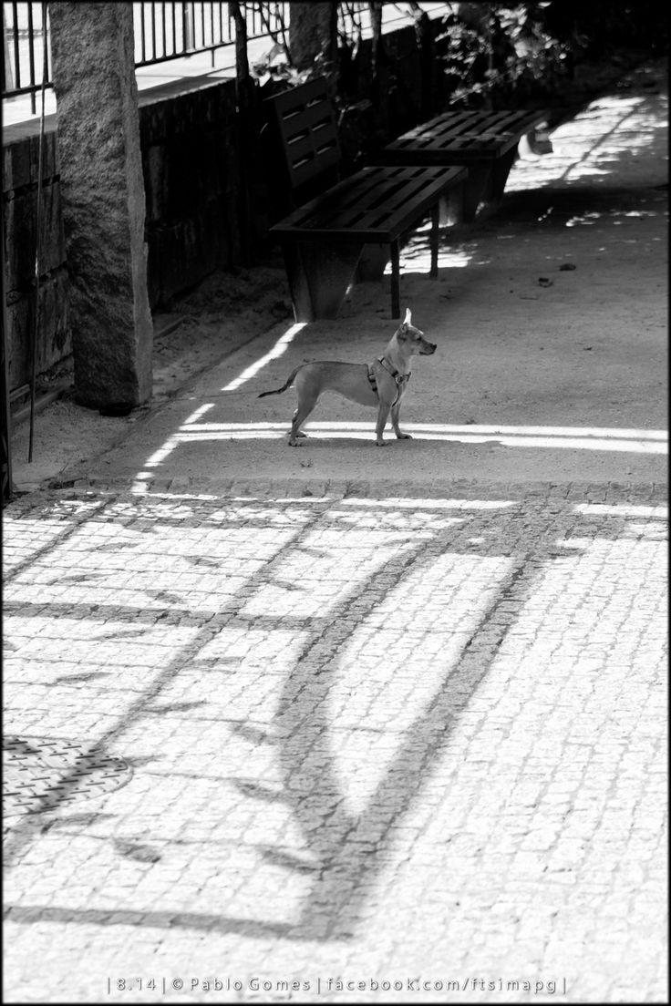 [2014 - Ponte de Lima - Portugal] #fotografia #fotografias #photography #foto #fotos #photo #photos #local #locais #locals #animal #animais #animales #animals #cao #perro #dog #europa #europe