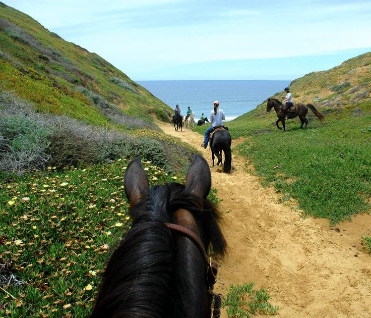 23 Best Slo County Horse Life Images On Pinterest Horse