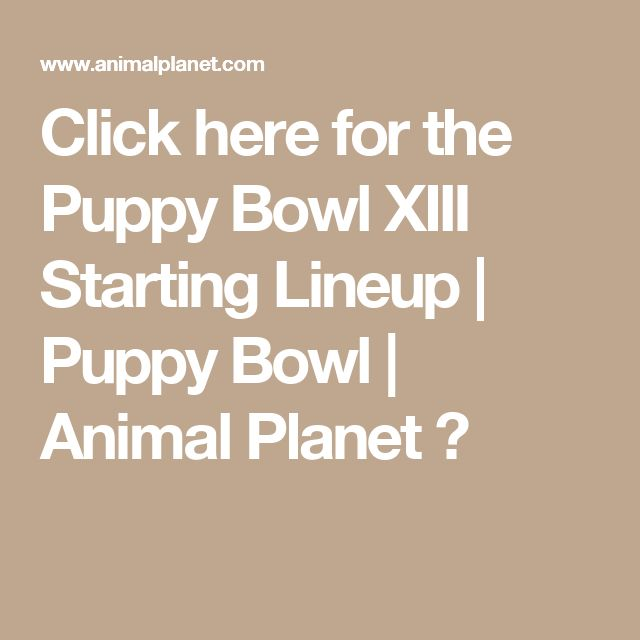 Click here for the Puppy Bowl XIII Starting Lineup | Puppy Bowl | Animal Planet :)