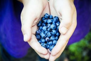 Blueberries in Utah  extension.usu.edu