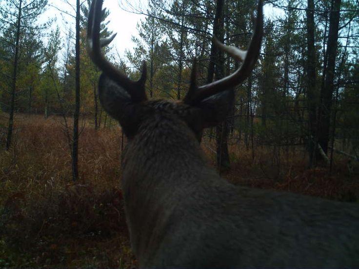 Buck-Jackson County