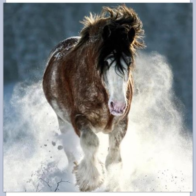 clydesdale Snow play Drafts Pinterest