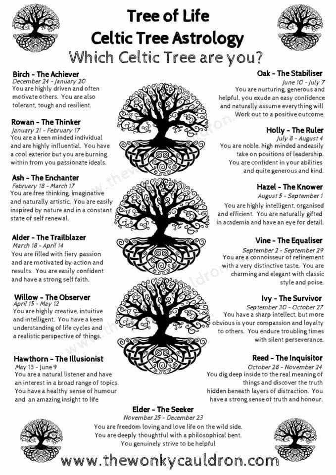 Tree Of Life Celtic Tree Astrology Celtic Tree Astrology Celtic Zodiac Celtic Astrology