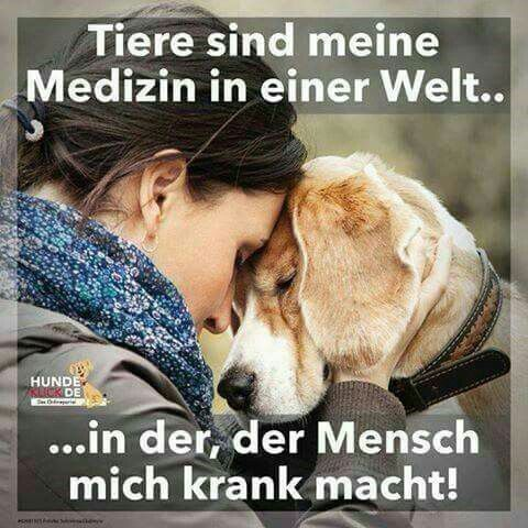 Tiere <3