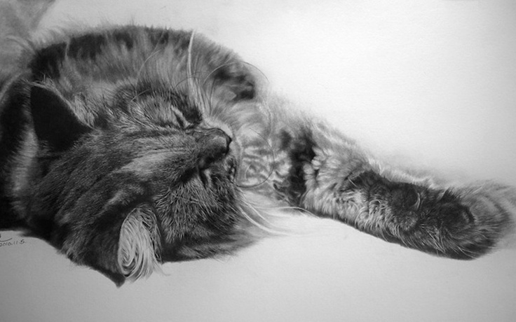 Вам не обязательно быть любителем кошек, чтобы оценить эти работы Пола Луна. Кошки на его рисунках выглядят невероятно реальными и точными. Пол затрачивает в среднем где-то около 40-60 часов, чтобы закончить всего одну картину.