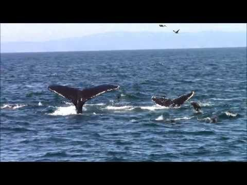 9.15.13 Whale Watching #Monterey California #VisitCa http://chriswhalewatching.com/   We are so doing driving to Santa Cruz this weekend!