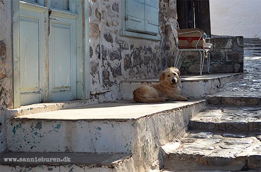 Impressions from Hydra, Greece, September 2016 © Sannie Terese Burén #Dog #Sunshine #Blue door