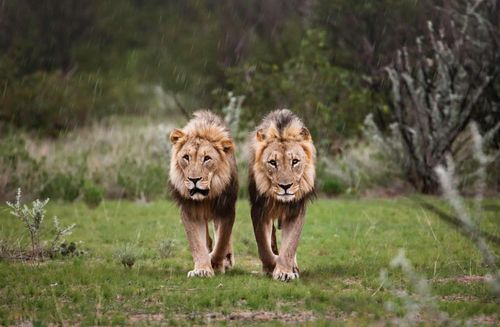 Brothers in the Rain! by Ed Hetherington Photography