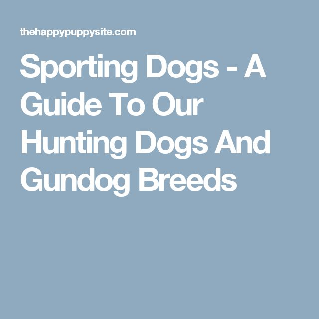 Sporting Dogs - A Guide To Our Hunting Dogs And Gundog Breeds