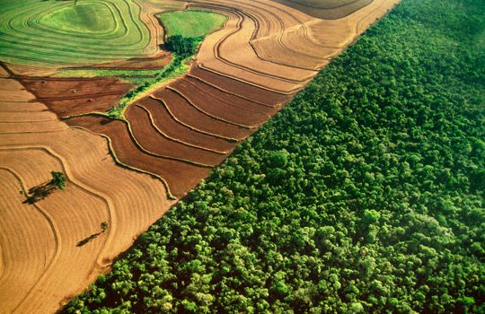 Aerial view of cropland bordering rainforest, Iguacu National Park, Brazil