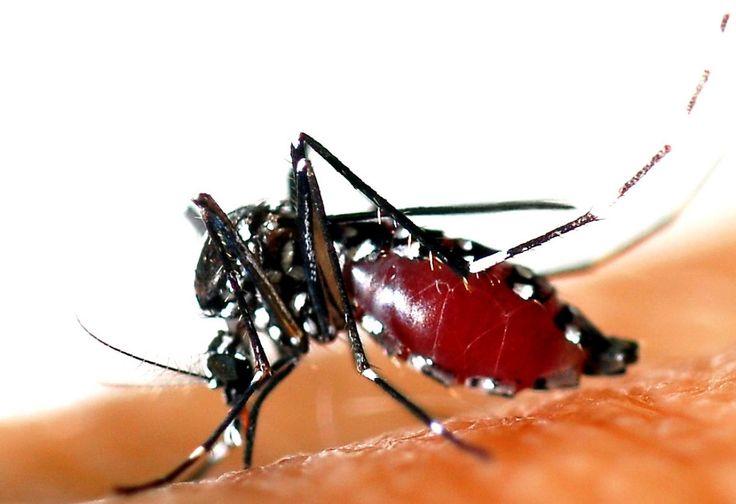 Zika peut déclencher un trouble neurologique grave appelé Guillain-Barré