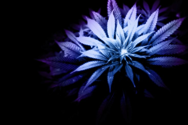 purple weed hd widescreen wallpapers weed and smoke