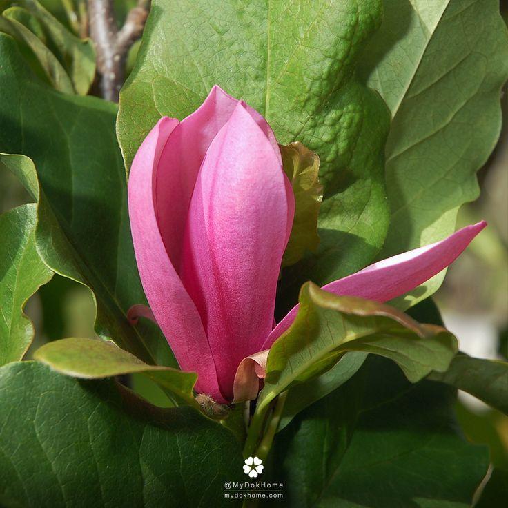 magnolia 39 jane 39. Black Bedroom Furniture Sets. Home Design Ideas