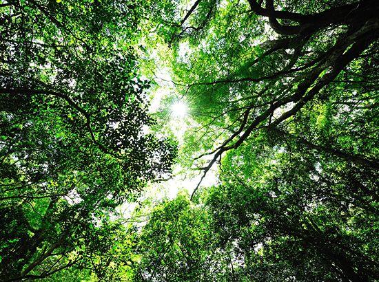 季節の見どころ|神宮の自然|伊勢神宮