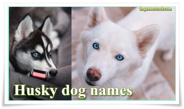 Dog Names Unique List Of Male And Female Dog Names Dog Names Husky Dog Names Best Dog Names