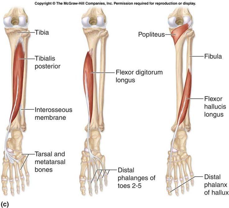 Hallux redux arthritis