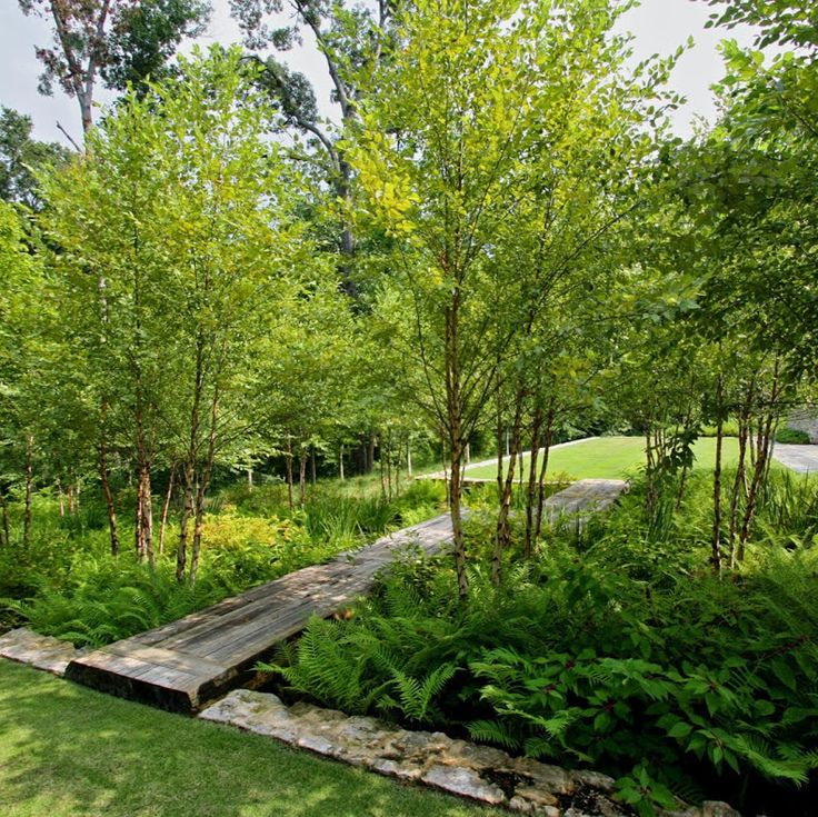 Award winning woodland rain garden | Jeffrey Carbo Landscape Architects | www.daisylovesdesign.com
