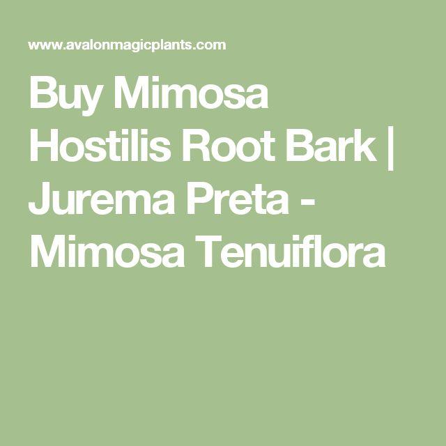Buy Mimosa Hostilis Root Bark | Jurema Preta - Mimosa Tenuiflora