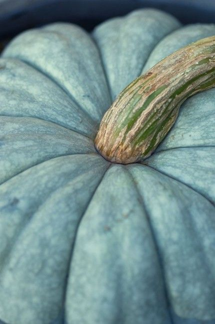 I have one of these outside right now. love blue and white pumpkins.