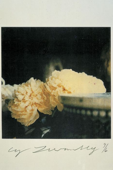 .: Cytwombl, Inspiration, Art Photography, Polaroid, Posts, Cy Twombly Photographers 2, Cream Flowers, Peonies, Floral
