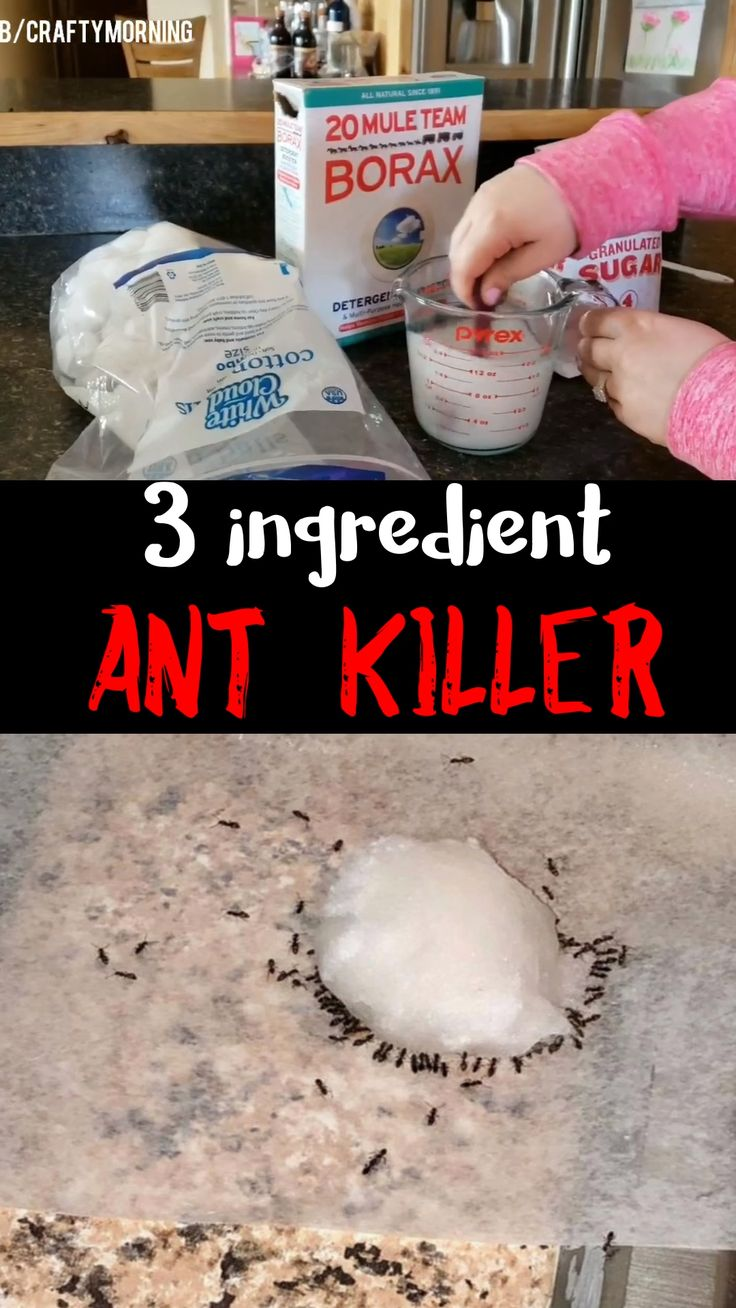 674c9024f444f53c9ed9b117072e9569 3 Ingredient Ant Killer