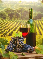 Vino Cirò DOC, the Barolo of the south and once offered to the winners of the ancient Olympic Games