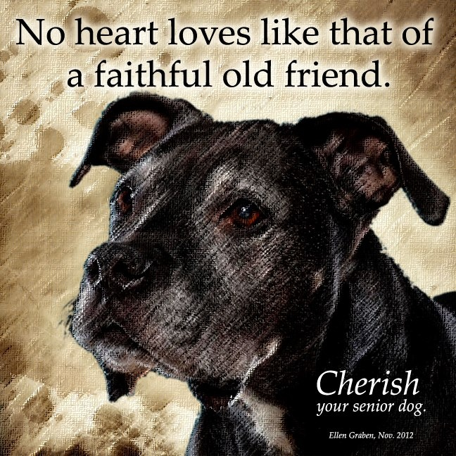 17 Best Images About Pins For Pets On Pinterest: 17+ Images About Dog Quotes And Sayings On Pinterest