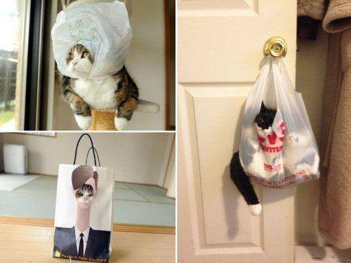 Смешные кошки в пакетах