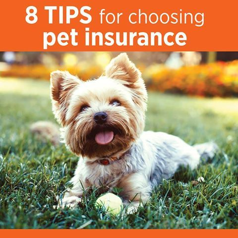 From comparing providers to asking about discounts, here are 8 tips for choosing the right pet health insurance provider