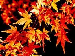 O Outono convida a olhar a paisagen
