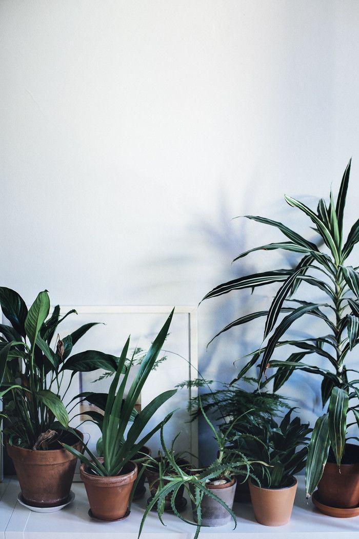 Huonekasvit - Suvi sur le vif | Lily.fi