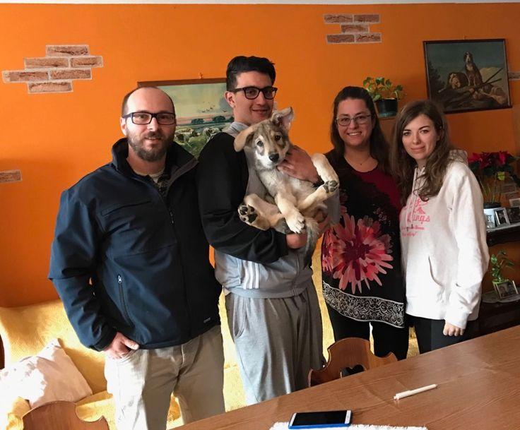 """Anche la nostra piccola """"Clelia La Santa di Fossombrone"""" ha raggiunto la sua nuova famiglia 😍🐺😉🐾 #cuccioli #difossombrone"""