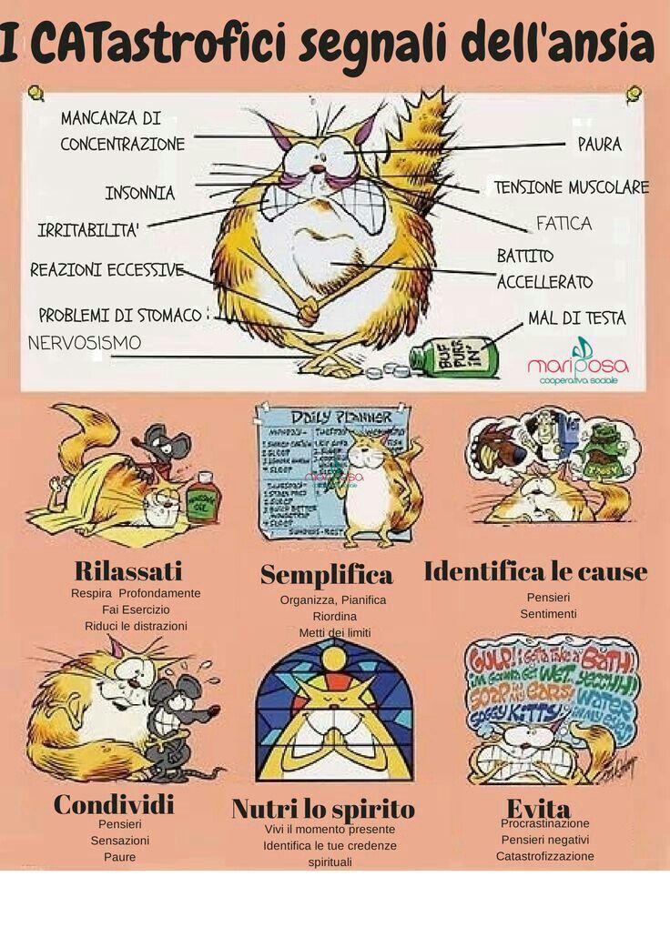 La saggezza del gatto