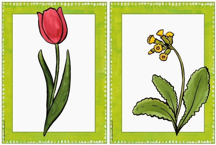 Sachunterricht in der Grundschule: Bildkarten Frühblüher