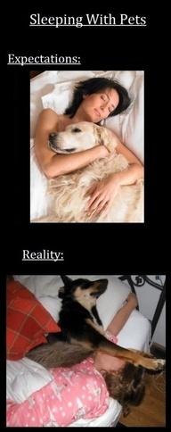 Ecco le differenze tra aspettative e realtà quando dormi con un #pet!