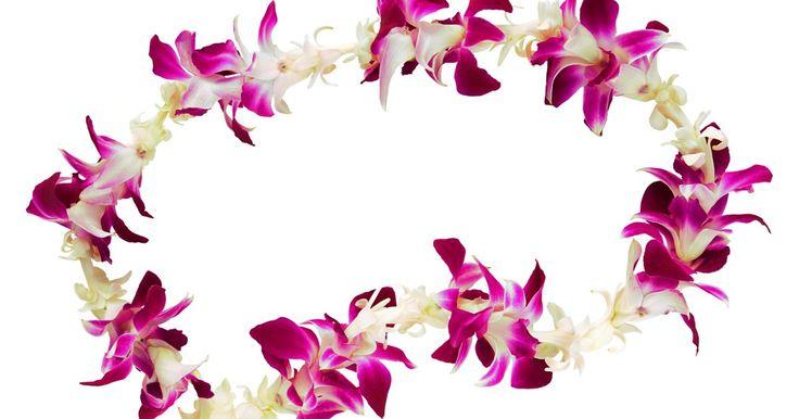 Cómo hacer collares hawaianos con flores frescas. Si puedes enhebrar una aguja puedes crear hermosos collares hawaianos con flores frescas. Estos collares son hechos de flores tropicales que puedes pedir en tiendas minoristas hawaianas o de flores que puedas encontrar en tu patio o jardín. Los collares hawaianos o leis, son impactantes a la vista y aromáticamente agradables. Estarás sorprendido ...
