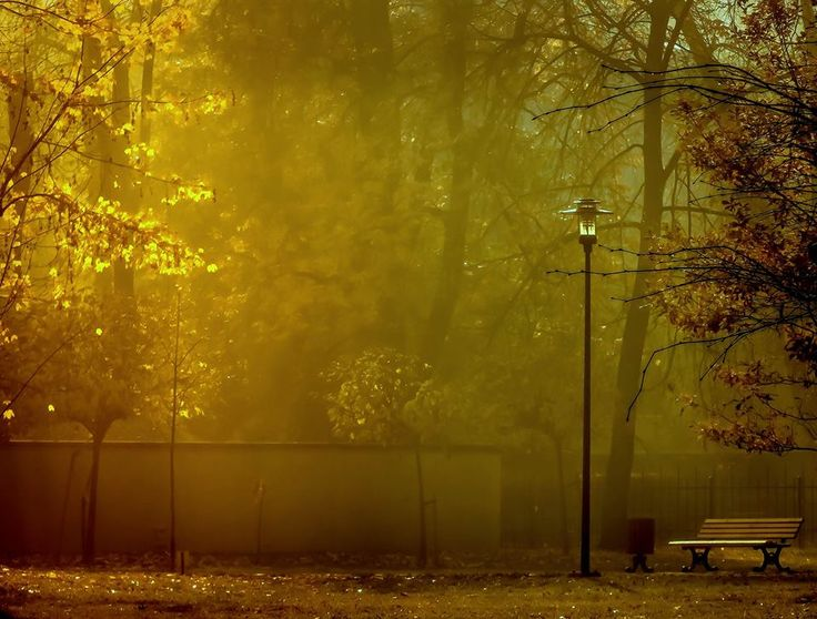 Poranny Park Chopina Emotikon (fot. Adam Skwarek)
